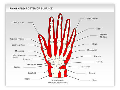 get free high quality hd wallpapers diagram of hand