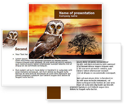 owl wallpapers for powerpoint - photo #23