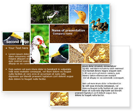 Duck PowerPoint Template #05190