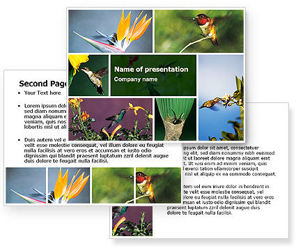 Hummingbird PowerPoint Template #06176