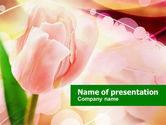 Holiday/Special Occasion: Light Pink Tulip PowerPoint Template #00817