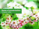 Nature & Environment: Blooming Cherry Tree PowerPoint Template #01207