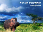 Northern lights: Hippopotamus PowerPoint Template #01826