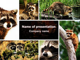 Northern lights: Free Raccoon PowerPoint Template #06692