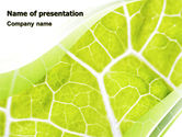Revival: Leaf Texture PowerPoint Template #06705