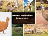 Agriculture: Free Lama PowerPoint Template #06716