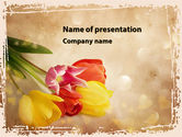 Holiday/Special Occasion: Tulip PowerPoint Template #09274