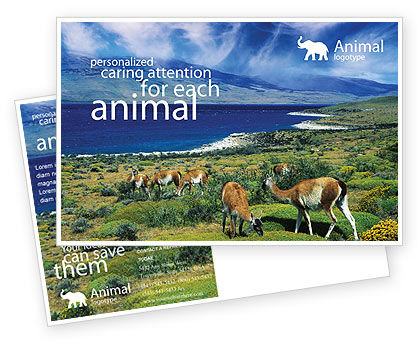 Pampa Postcard Template, 01950, Agriculture and Animals — PoweredTemplate.com
