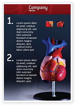 Medical: Heart Model Advertentie Template #01960