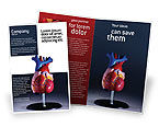 Medical: Heart Model Brochure Template #01960