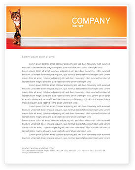 Curious Cat Letterhead Template, 02560, Agriculture and Animals — PoweredTemplate.com