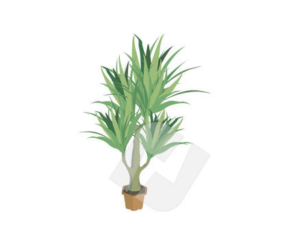 Housing & Interior: Aloe Vector Clip Art #00166