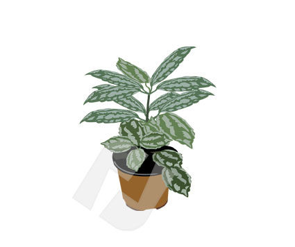 Housing & Interior: Rubber Plant Vector Clip Art #00167
