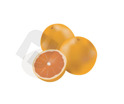 Food & Beverage: Orange Vector Clip Art #00179