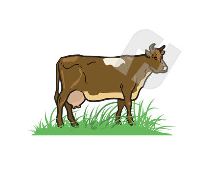 Animals and Pets: Cow Vector Clip Art #00244
