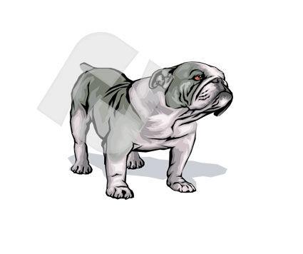 Animals and Pets: Bulldog Vector Clip Art #00246