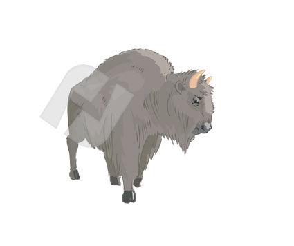 Animals and Pets: Bufallo Vector Clip Art #00247