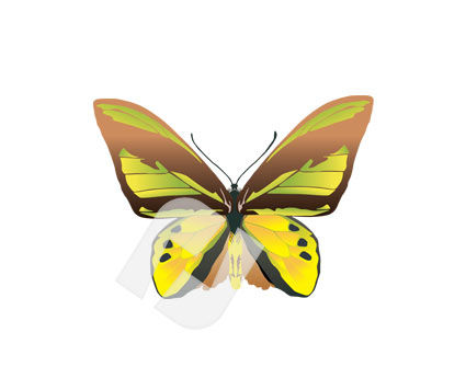 Animals and Pets: Butterfly Vector Clip Art #00251
