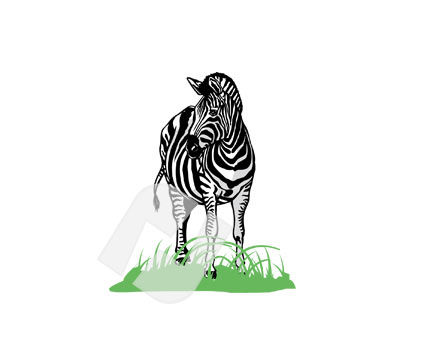 Zebra Vector Clip Art, 00252, Animals and Pets — PoweredTemplate.com