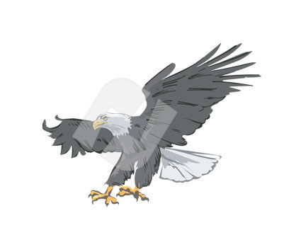 Animals and Pets: Amerikanischer weißkopfseeadler Clip Art #00260