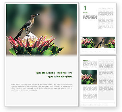 Nature & Environment: Cape Sugarbird Word Template #02052