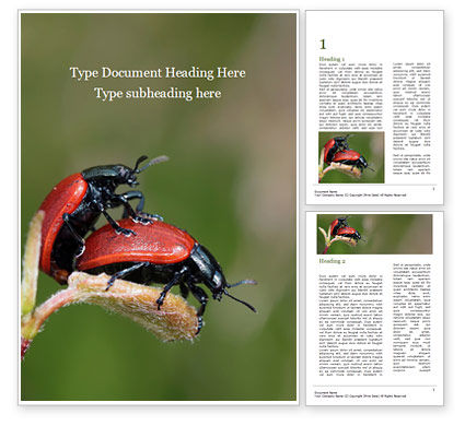 Nature & Environment: Two Ladybugs Word Template #15533