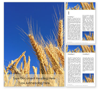 Food & Beverage: Golden Ears of Wheat Against the Blue Sky Word Template #15899