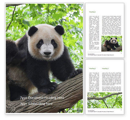 General: Cute Panda Bear is Sitting on Tree Branch Word Template #15927