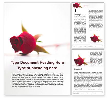 Holiday/Special Occasion: Beautiful Red Rose Flower Isolated On White Background Presentation Gratis Word Template #16612