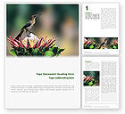 Nature & Environment: Cape sugarbird Word Vorlage #02052