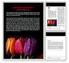 Holiday/Special Occasion: Colorful Tulips Word Template #06496
