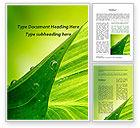 Nature & Environment: 워드 템플릿 - 이슬과 녹색 잎 #09659