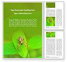 Nature & Environment: 十字军蜘蛛免费Word模板 #15720