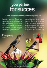 Nature & Environment: Templat Periklanan Gratis Cape Sugarbird #02052