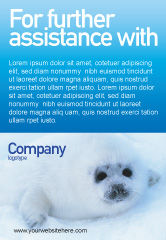 Agriculture and Animals: Sealskin Gratis Advertentie Template #02230