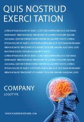 Medical: Modelo de Anúncio - cérebro no crânio #03110