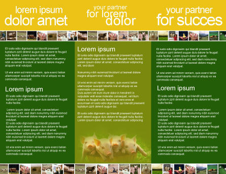 Pig Brochure Template, Inner Page, 01708, Agriculture and Animals — PoweredTemplate.com
