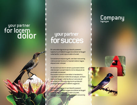 Cape Sugarbird Brochure Template, Outer Page, 02052, Nature & Environment — PoweredTemplate.com