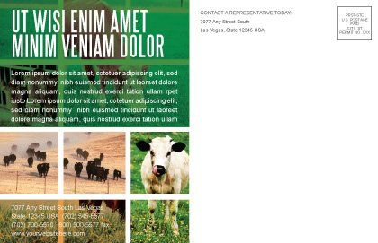 Cow Postcard Template, Inner Page, 04991, Agriculture and Animals — PoweredTemplate.com