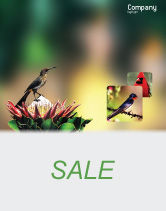 Nature & Environment: Cape Sugarbird Sale Poster Template #02052