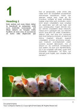 Pig Word Template, First Inner Page, 01708, Agriculture and Animals — PoweredTemplate.com