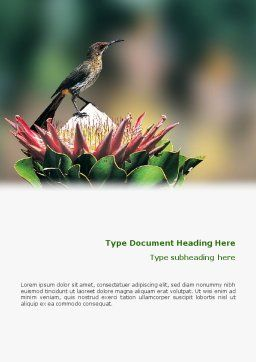 Cape Sugarbird Word Template, Cover Page, 02052, Nature & Environment — PoweredTemplate.com
