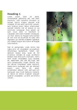 Spider Word Template, First Inner Page, 02704, Agriculture and Animals — PoweredTemplate.com