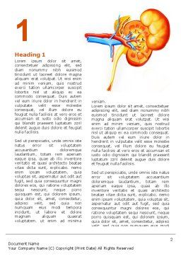 Kidneys Word Template, First Inner Page, 03275, Medical — PoweredTemplate.com
