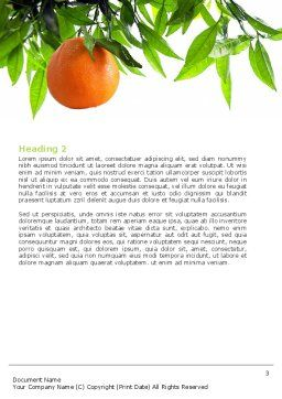 Orange Tree Word Template, Second Inner Page, 05547, Agriculture and Animals — PoweredTemplate.com