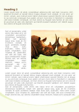 Two Rhinos Word Template, First Inner Page, 08438, Agriculture and Animals — PoweredTemplate.com