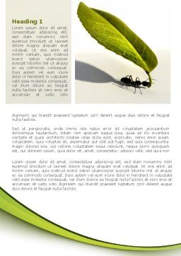 Spring Ant Word Template, First Inner Page, 08566, Business Concepts — PoweredTemplate.com