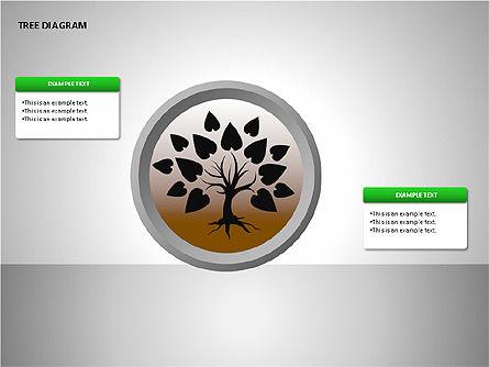 Tree Diagrams Slide 3