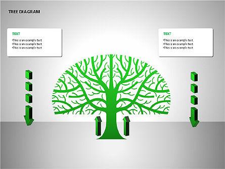 Tree Diagrams Slide 4
