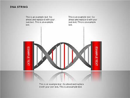 DNA Strand Diagrams, Slide 11, 00113, Shapes — PoweredTemplate.com